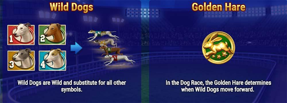 Wildhound Derby Slot - Race Info